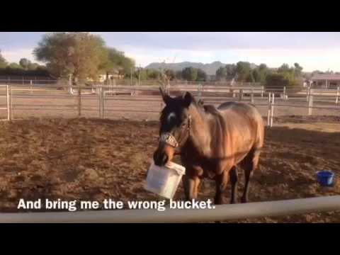 Are horses color blind - YouTube