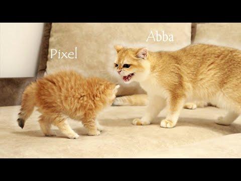 Pequeños gatitos se encuentran con sus hermanas mayores por primera vez