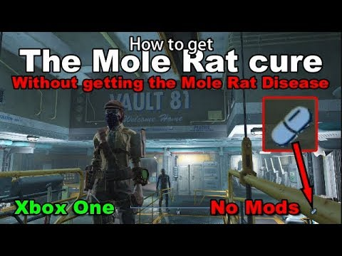 How Not To Get The Mole Rat Disease