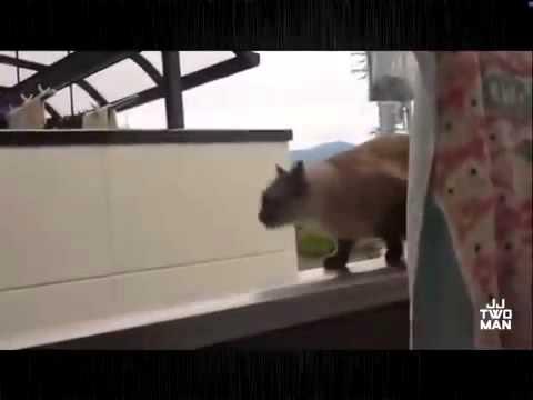 Видео прыгающие коты