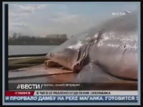 питерские акулы на страже секса