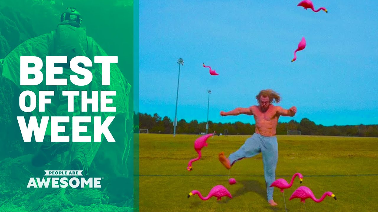 Man vs. Plastic Flamingos | Best of the Week (ft. Jujimufu)