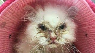 """""""Мы его не примем, он безнадежен!"""" Женщина спасла кота, которого везде советовали усыпить"""
