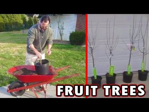 Bare Root Fruit Trees How To Plant Grow Summer Stone Nursery