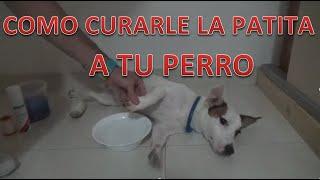 Pierna alivio rota perro de de dolor