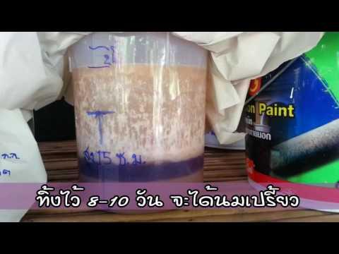 สูตร4 น้ำหมักเชื้อจุลินทรีย์จากน้ำซางข้าวและนมสด (นมเปรี้ยว)