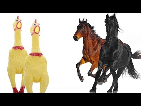 Old Town Road - Chicken Cover