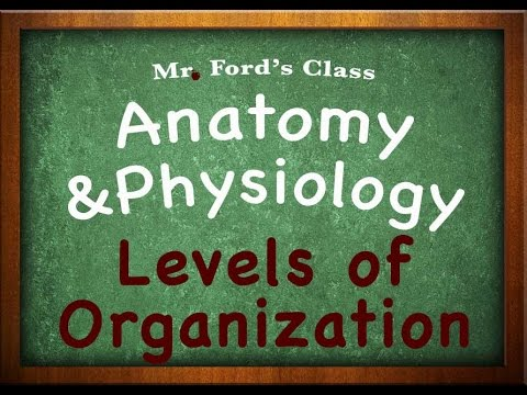 Introduction To Anatomy Physiology Levels Of Organization 0103