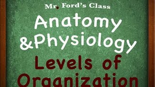 Introduction To Anatomy Physiology : Levels of Organization