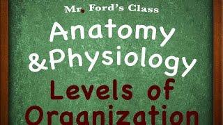 Introduction Anatomy Physiology: Levels of Organization (01:03)