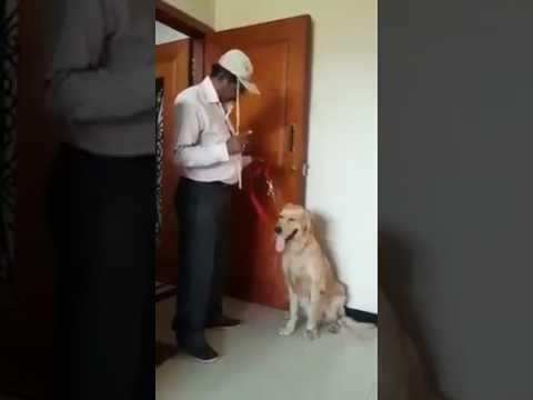 Pets Playhouse Kennel, Mumbai dog can calculate maths dog barking, bark training how