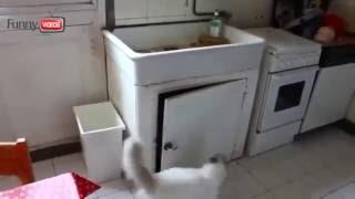#Видео прикол!!! Кот Неудачник! А кота-то жалко! Смешное видео#