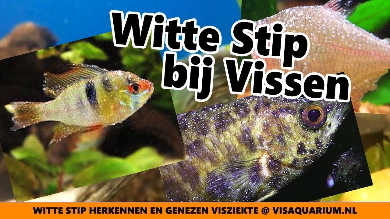 visziekten herkennen