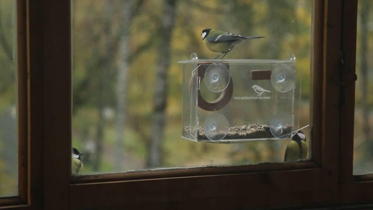 Кормушка на пластиковое окно своими руками фото 104