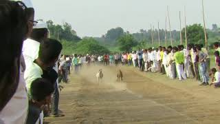 Dog race in india