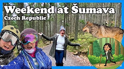 A weekend in Šumava - Czech Republic // We saw wolfs!!