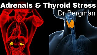 How to Heal Thyroid and Adrenal Fatigue