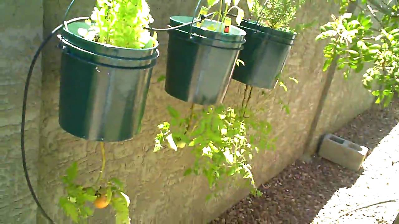 Growing a Backyard Vegetable Garden in Phoenix , Arizona ...