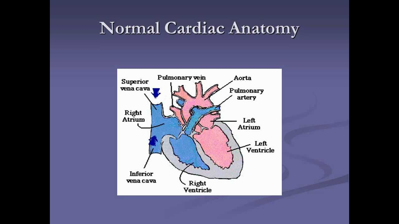 Neonatal Physiology - YouTube