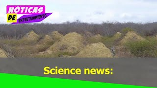 Science news: DISCOVERY in Brazil reveals termites created a Wonder of the World | Nature | News