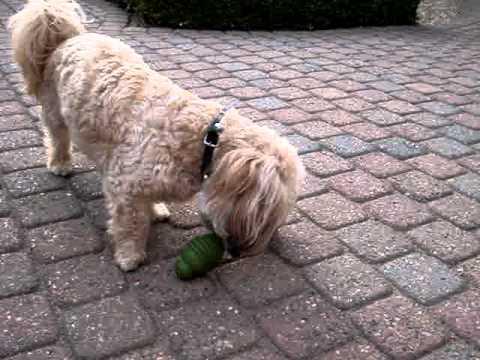 SUMO Play: uw hond verveelt zich nooit meer