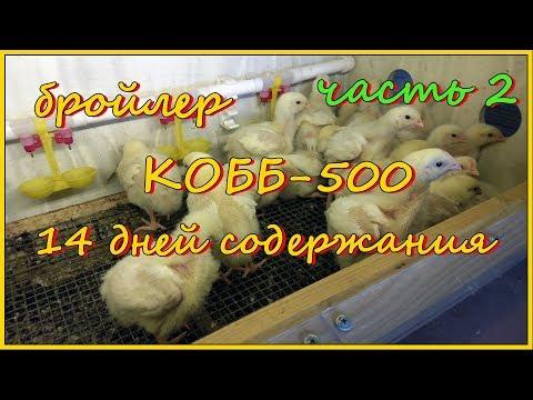 Бройлеры КОББ-500. Итоги содержания. Часть 2.