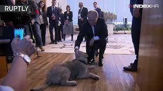 Poklon na četiri noge: Pogledajte što su Srbi poklonili Putinu