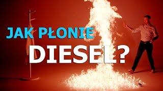 Czy ropa jest z dinozaurów?