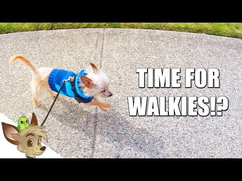Time for Walkies