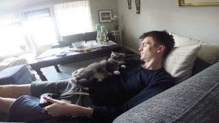 Кот не дает играть в видеоигры