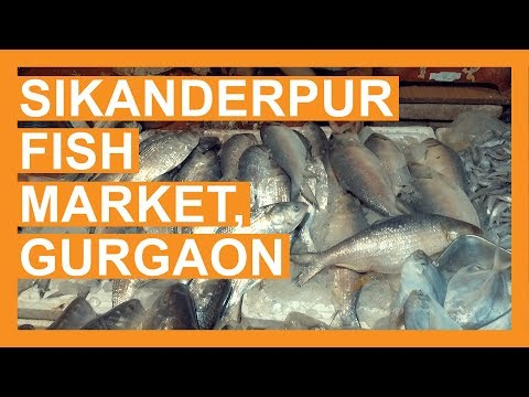 Papda, Rohu, Prawn, Hilsa… Its Swimming With Variety At Bristol (Sikanderpur) Fish Market, Gurgaon