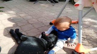 Ребенок не боится собаку. Бесстрашный.(Маленький ребенок засунул в рот собаке свою руку и почесал ей нос. Не повторяйте этого с детьми, если не..., 2016-04-23T19:14:00.000Z)