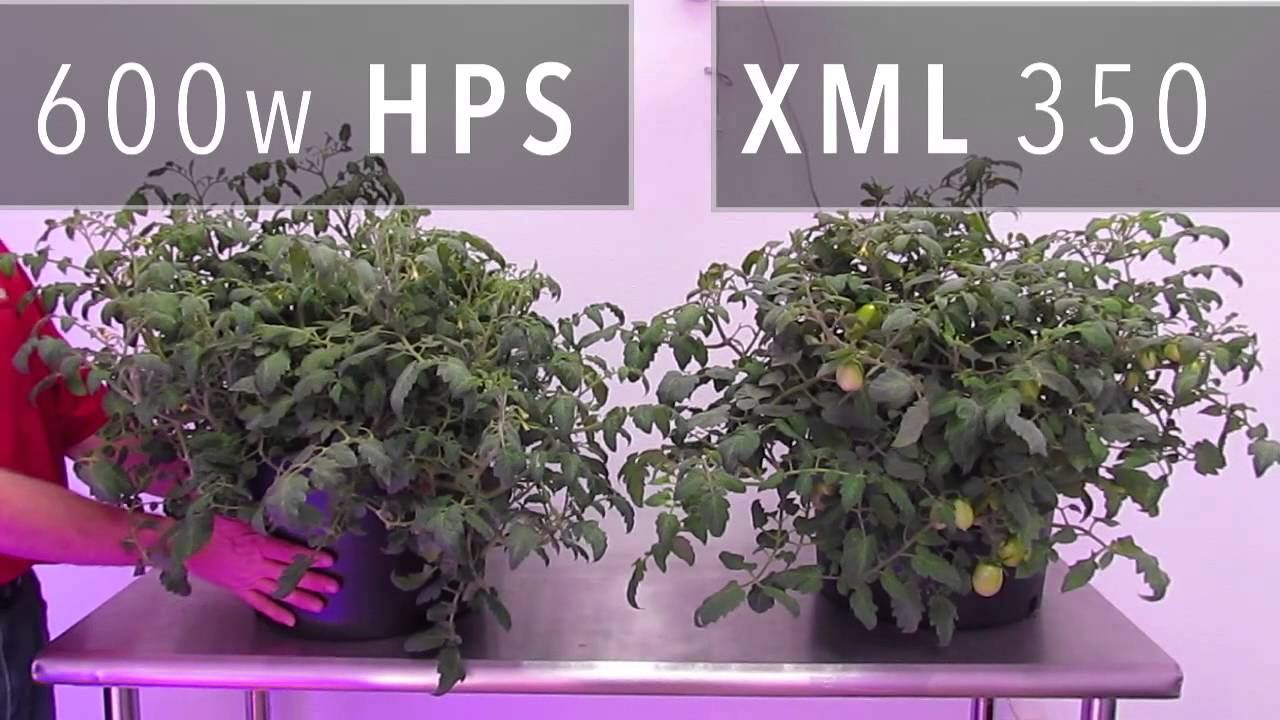 Light Xml Led Grow Vs600w Hps 350 b7yf6g