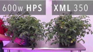 xml 350 led grow light vs 600w hps grow light