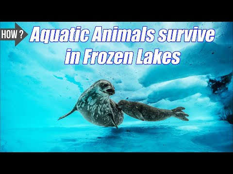 How Do Aquatic Animals Survive In Frozen Lakes? Plants & Animal Facts | Seriously True