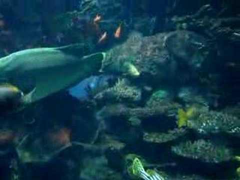 aquarium burj al arab