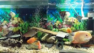 Que tipo de luz usar para nuestro acuario