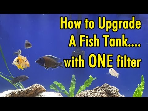 How To Upgrade A Fish Tank With ONE Filter