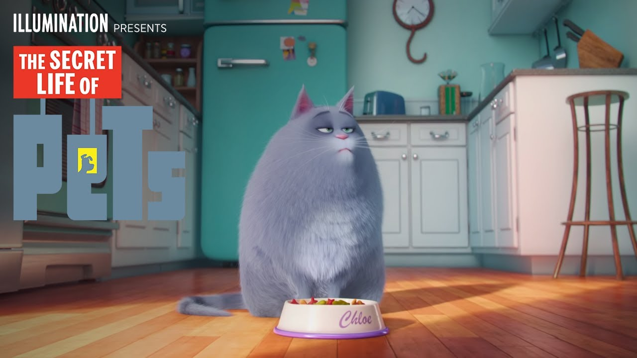 The Secret Life Of Pets Meet Chloe Hd Illumination Youtube