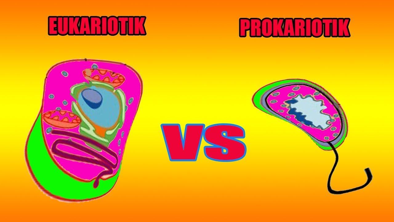 Membedakan Struktur Sel Prokariotik Dan Eukariotik