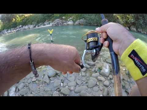 Video tutorial Feeder Fishing pratico in fiume Esino, Chienti