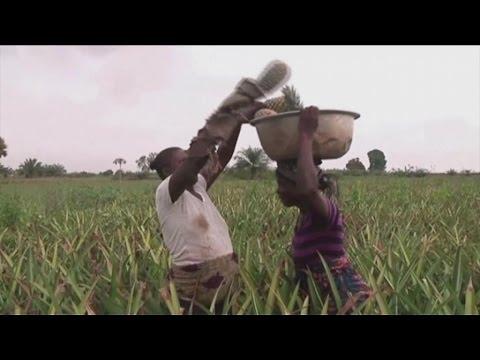 Afrique, L'ananas africain prisé
