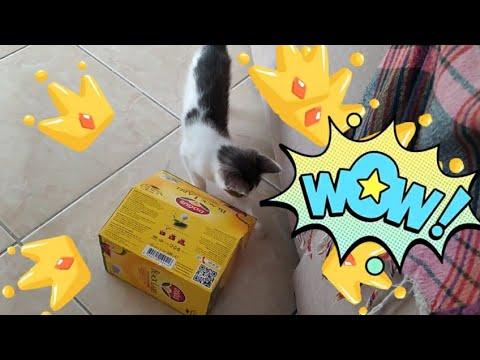 Что котенок Мия ищет в коробке? Смешное видео с кошкой и ...