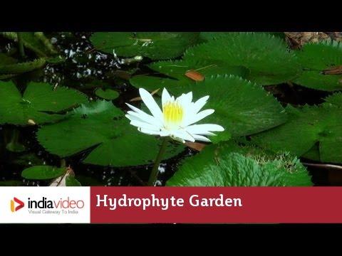 Hydrophyte Garden in Nilambur