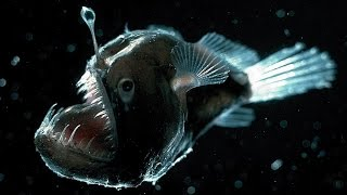 The Incredible Glowing Creatures of the Deep Sea   :   Documentary on Bioluminescent Sea Life