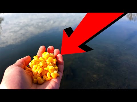 How To CHUM For BIG FISH! Catfish/Carp Chumming! Easy, Effective, Cheap!
