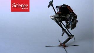 Parkour robot can do wall jumps