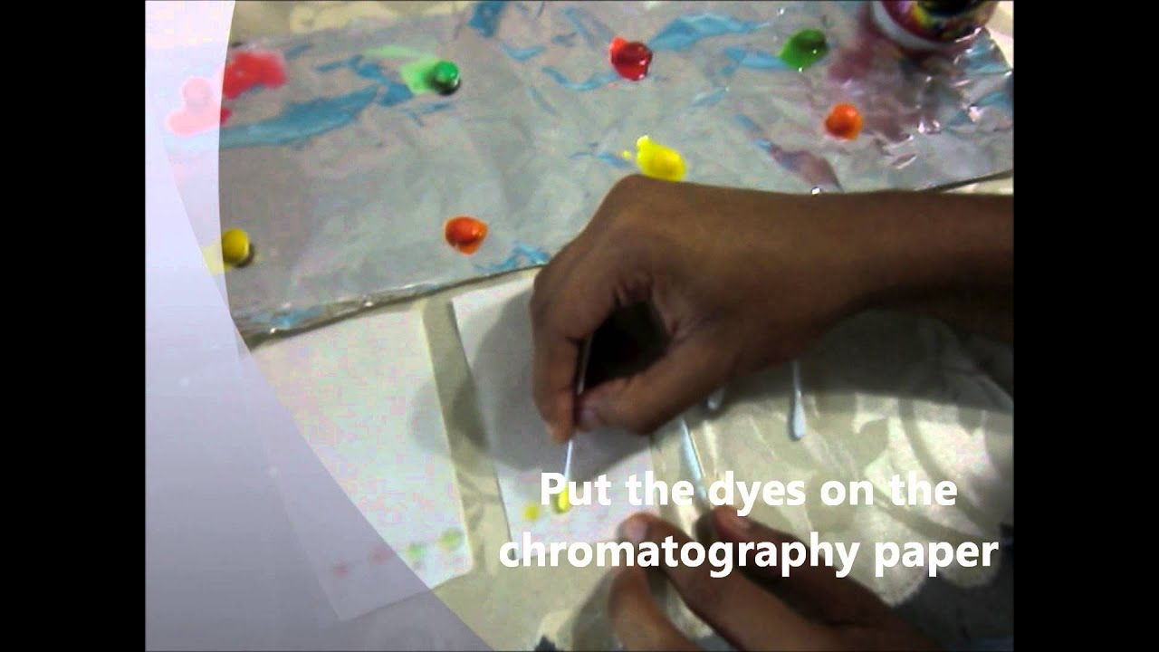 chromatography of m m and ink dyes The distance moved by the slow dye is 32 mm  substances like vegetable dyes  or inks could be tested using this chromatography method.
