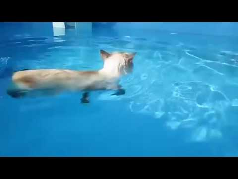 Cats swimming in the pool