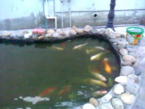 2000 gallon koi pond youtube for Koi pond gallons